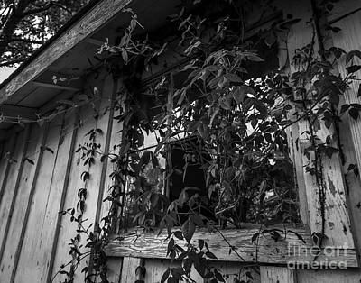 Photograph - Plants Through The Window by Ken Frischkorn