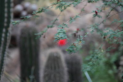 Botanic Photograph - Plants - Us Botanic Garden - 01133 by DC Photographer