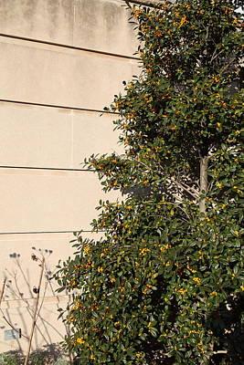 United Photograph - Plants - Us Botanic Garden - 01134 by DC Photographer
