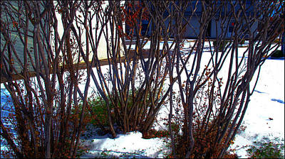Photograph - Plantscape2 2009 by Glenn Bautista