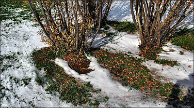 Photograph - Plantsgrasscomp 2009 by Glenn Bautista