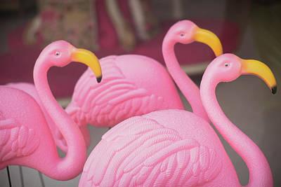 Kitschy Photograph - Plastic Pink Flamingos, Charleston by Julien Mcroberts