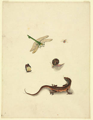 Plate 101 Art Print by Natural History Museum, London