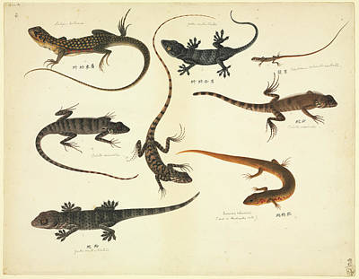 Plate 102: John Reeves Collection Zoology Art Print by Natural History Museum, London