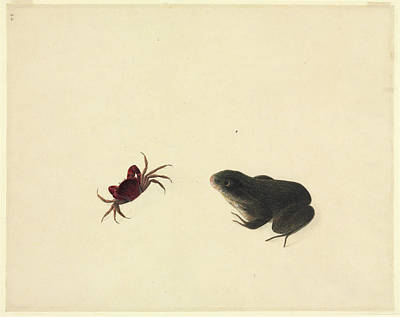 Anura Photograph - Plate 105 by Natural History Museum, London