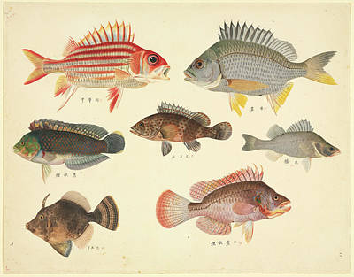 Plate 110: John Reeves Collection Art Print by Natural History Museum, London