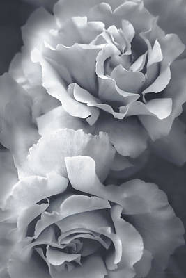 Platinum Photograph - Platinum Gray Roses by Jennie Marie Schell