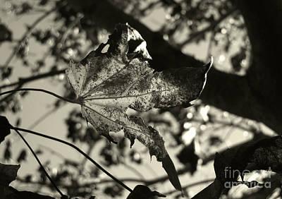 Photograph - Platinum Leaves 5 by Jeff Breiman