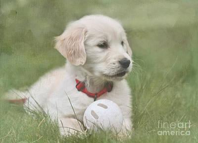Labrador Digital Art - Play Ball by Jayne Carney