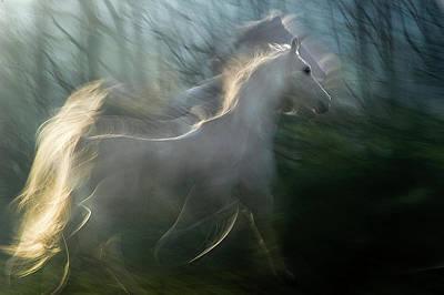 White Horse Wall Art - Photograph - Play Graund by Milan Malovrh