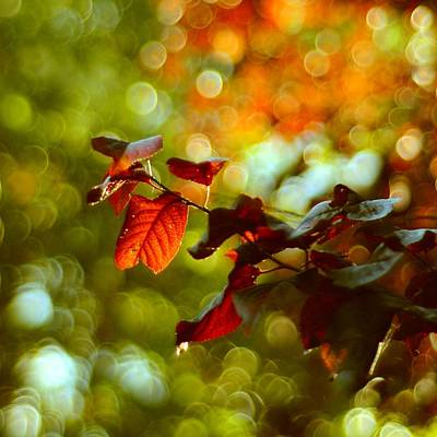 Photograph - Play Of Light by Gynt