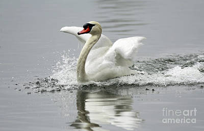 Playful At The Lake Art Print by Inspired Nature Photography Fine Art Photography
