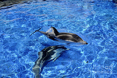 Photograph - Playful Dolphins by Brenda Kean