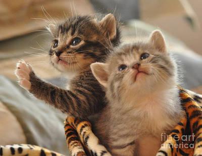 Playful Kittens Art Print by Debby Pueschel