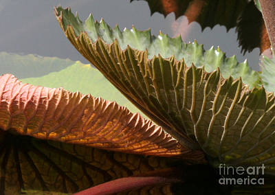 Photograph - Playful Lily Pads by Sabrina L Ryan