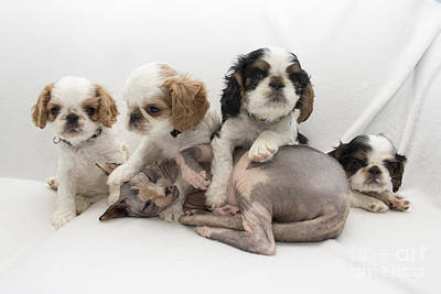 Photograph - Playful Puppies by Jeannette Hunt