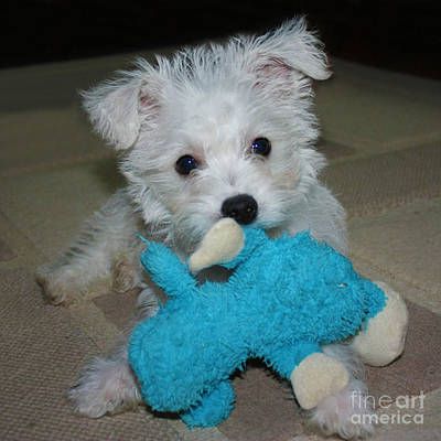 Photograph - Playful Puppy by Terri Waters