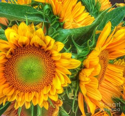 Photograph - Playful Sun Flowers by Susan Garren