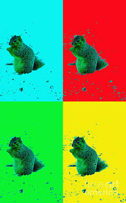 Royalty-Free and Rights-Managed Images - Playful Winter squirrels by Tina M Wenger