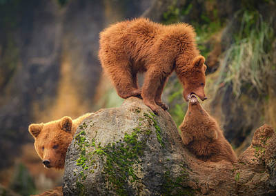 Grizzlies Wall Art - Photograph - Playing In The Heights by Sergio Saavedra Ruiz