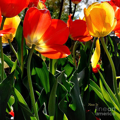 Photograph - Playing In The Tulips by Nava Thompson