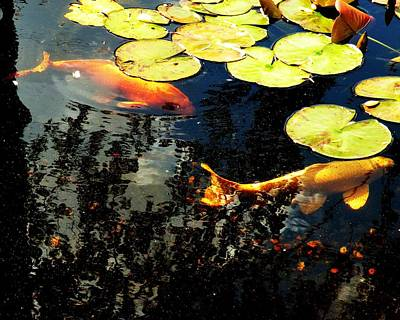 Goldfish Photograph - Playing Koi 2 by Kim Bemis