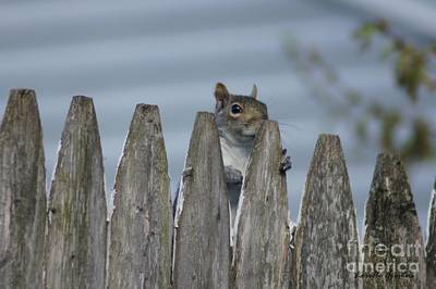 Photograph - Playing Peek-a-boo by Lorelle Gromus