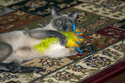 Tonkinese Photograph - Playtime by Sally Weigand