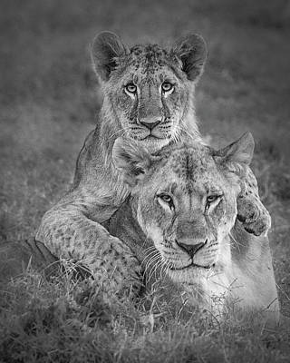 Lion Wall Art - Photograph - Playtime With Mama! by Ali Khataw