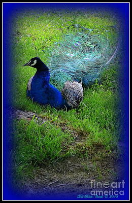 Photograph - Pleasant Peacock by Deb Badt-Covell