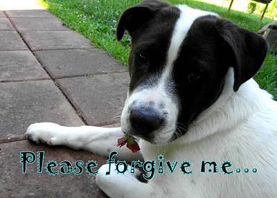 Photograph - Please Forgive Me  by Kim Galluzzo Wozniak