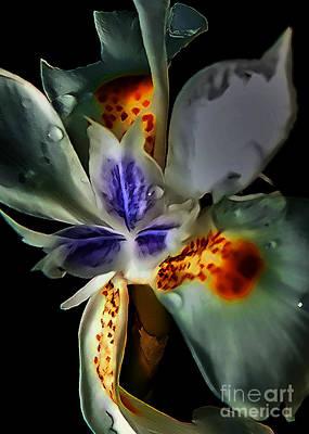 Pleatleaf Flower Art Print