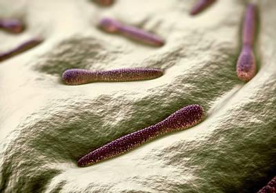 Microscopic Photograph - Pleurotaenium Desmid by Science Artwork