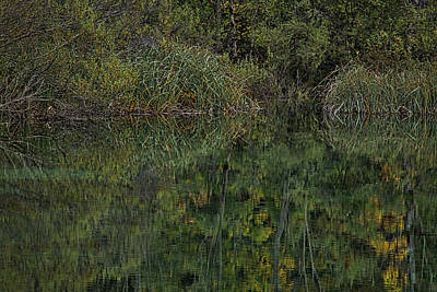 Photograph - Plitvice Lakes Green Reflections by Stuart Litoff