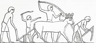 Ancient Civilization Photograph - Ploughing, Hoeing And Sowing With Animals In Ancient Egypt.  From The Imperial Bible Dictionary by Bridgeman Images