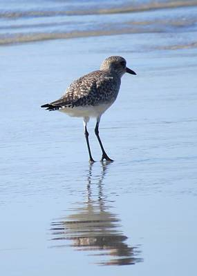 Photograph - Plover 1 by Nina Donner