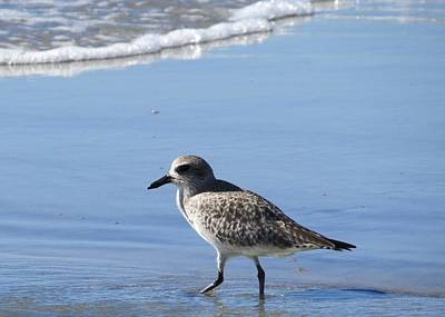 Photograph - Plover 2 by Nina Donner