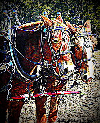 Photograph - Plow Buddies by Sheri McLeroy