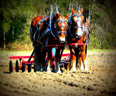 Photograph - Plow Day by Sheri McLeroy