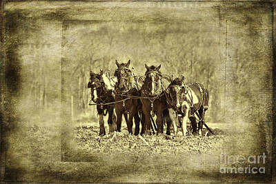 Photograph - Plow Horses by David Arment