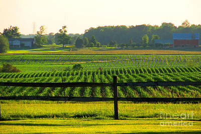 Old Masters -  Seeded Rows  From End To End by Tina M Wenger