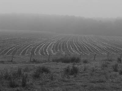 Photograph - Plowed In The Fog by Bill Tomsa