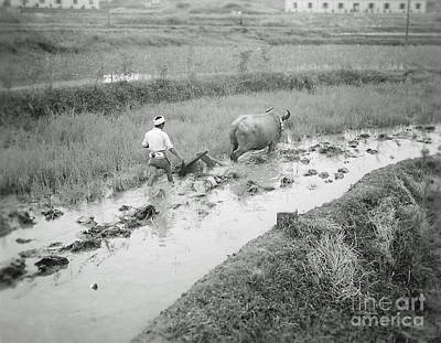 Plowing A Rice Paddy Art Print