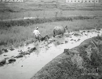 Ikon Photograph - Plowing A Rice Paddy by Bob Hislop