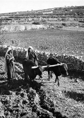 Photograph - Plowing Near Hebron by Munir Alawi