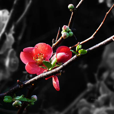 Photograph - Plum Blossom 3 by Xueling Zou
