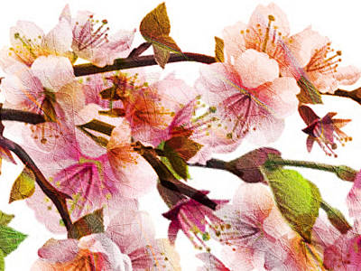 Digital Art - Plum Blossoms by Kiki Art