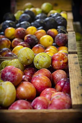 Farmstand Photograph - Plum Gorgeous by Caitlyn  Grasso