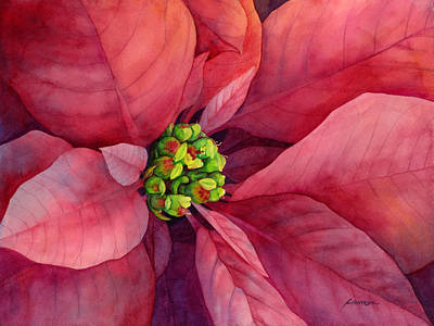Pink Cards Painting - Plum Poinsettia by Hailey E Herrera