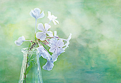 Photograph - Plumbago by Margaret Hormann Bfa